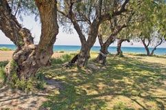 Beautiful Aegean sea coast in Rhodes island, Greece Stock Photography