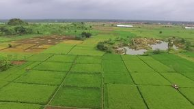 Beautiful Aerial/drone view of rice paddy fields in the slawi city indonesia. Beautiful Aerial/drone view of rice paddy fields in the slawi city, with green stock video
