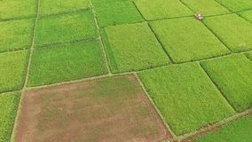 Beautiful Aerial/drone view of rice paddy fields in the slawi city indonesia stock video