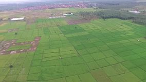 Beautiful Aerial/drone view of rice paddy fields in the slawi city indonesia. Beautiful Aerial/drone view of rice paddy fields in the slawi city, with green stock footage
