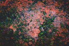 Beautiful aerial shot of a forest stock photos