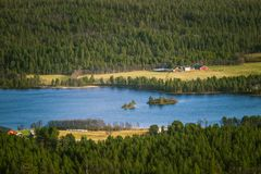 A beautiful aerial view of an autumn forest with lake in Norway. Pine trees from above. Royalty Free Stock Image