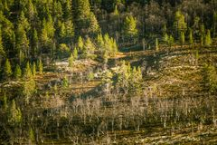 A beautiful aerial view of an autumn forest with lake in Norway. Pine trees from above. Stock Photo