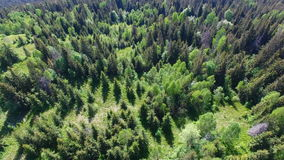 Beautiful aerial view of forest in mountains stock video