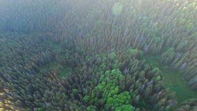 Beautiful aerial view of forest in mountains on sunset stock footage