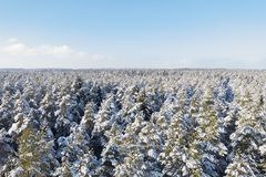 Beautiful aerial view of forest in winter stock images