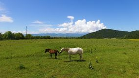 Beautiful aerial view of horses grazing in green valley, farming business. Stock footage stock footage