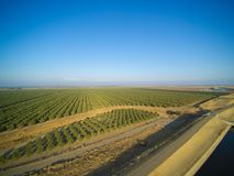 Beautiful aerial view of large almond orchard. On a California farm in summer. Drone image of rows of green almond trees Royalty Free Stock Photography