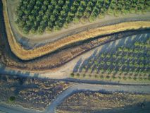 Beautiful aerial view of large almond orchard. On a California farm in summer. Drone image of rows of green almond trees Royalty Free Stock Photo
