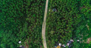 Beautiful aerial view of road on palms at Siargao Island, Philippines.  stock image