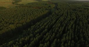 Aerial view of a thick forest in summer evening