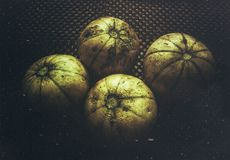 A beautiful aesthetic image of muskmelon fruit. A beautiful aesthetic image of four muskmelon fruits. They are arranged beautifully on a table and clicked royalty free stock photos