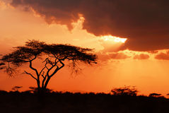 Beautiful african sunset. (Samburu Reserve, Kenya Stock Photography