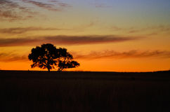 Beautiful african sunset landscape Royalty Free Stock Photos