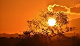 Beautiful african sunset Stock Photo