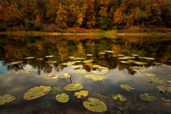 Beautiful afternoon in the autumnal park Stock Image