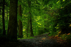 Beautiful afternoon light in a forest Royalty Free Stock Images