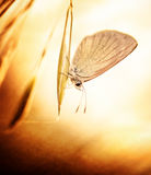 Grunge photo of butterfly Stock Photos