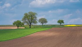 Beautiful agricultural field royalty free stock photo