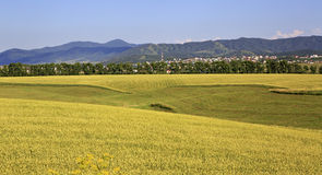 Beautiful agricultural fields and the town of Royalty Free Stock Image