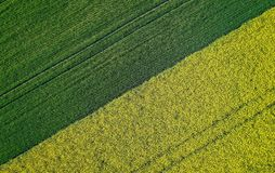Beautiful agricultural half green half yellow grass field shot with a drone stock photo