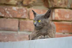 Beautiful alien cat sitting on a parapet Stock Images