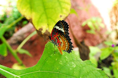 Beautiful alive Butterfly in garden Royalty Free Stock Image