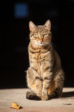 Beautiful alley cat in the sun Stock Photos