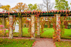 Beautiful alley. In a country house in autumn, Saint-Petersburg, Russia Royalty Free Stock Photos