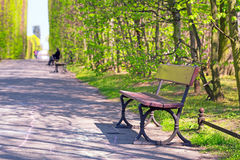 Beautiful alley with empty bench in the park Royalty Free Stock Photos