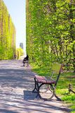 Beautiful alley with empty bench in the park Royalty Free Stock Photography