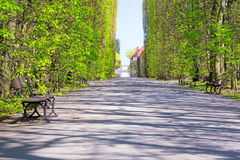 Beautiful alley with empty bench in the park Royalty Free Stock Images