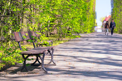 Beautiful alley with empty bench in the park Royalty Free Stock Photo