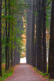 Beautiful alley in the forest Stock Image