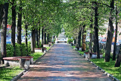 Beautiful alley with green trees and benches Royalty Free Stock Photos