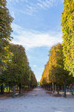 Beautiful alley on lower Champs Elysees boulevard. In Paris royalty free stock photo