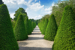 Beautiful alley in park Royalty Free Stock Photos