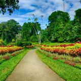 A beautiful alley in the Park with exotic plants Stock Image
