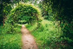 Beautiful Alley In Park. Garden Landscaping Design Royalty Free Stock Photography