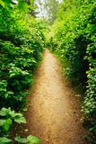 Beautiful Alley In Park. Garden Landscaping Design Stock Images