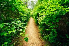 Beautiful Alley In Park. Garden Landscaping Design Royalty Free Stock Photos