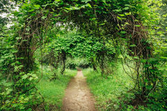 Beautiful Alley In Park. Garden Landscaping Design Royalty Free Stock Image