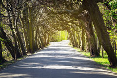 Beautiful alley in the park Stock Photo