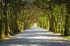 Beautiful alley in the park Royalty Free Stock Images