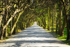 Beautiful alley in the park Stock Images