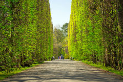 Beautiful alley in the park Royalty Free Stock Image