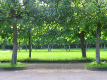 Beautiful alley - 2. Beautiful alley in the park of Saint-Petersburg in the summer Stock Image