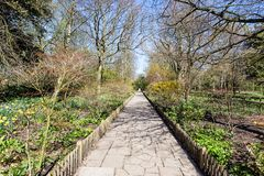 Beautiful alley in the park Royalty Free Stock Photography