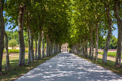 Beautiful alley of plane trees with a house at the end of alley. Royalty Free Stock Photos