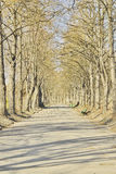 Beautiful alley in spring park Royalty Free Stock Photos